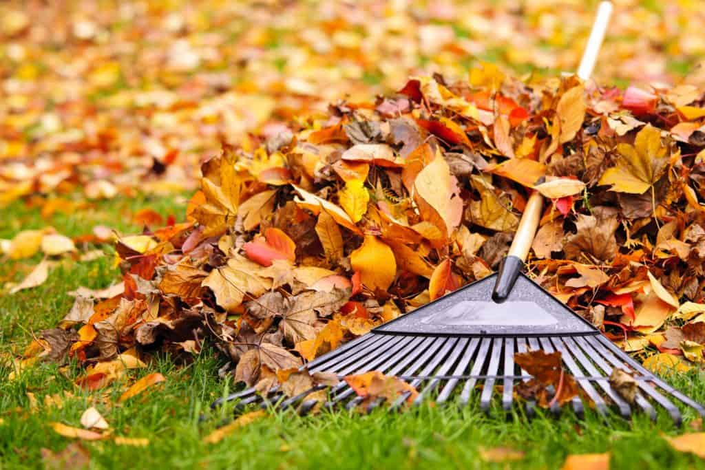 Canton Spring and Fall Leaf Removal Cleanup
