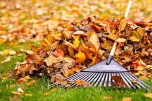 Spring and Fall Leaf Cleanup Removal in Canton, OH